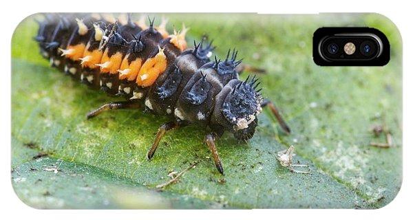 Harlequin Ladybird Larva IPhone Case