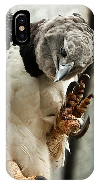 Colombia iPhone Case - Harpy Eagle by Jess Kraft