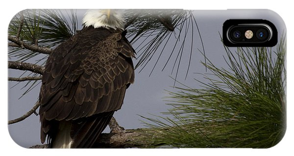 Harriet The Bald Eagle IPhone Case