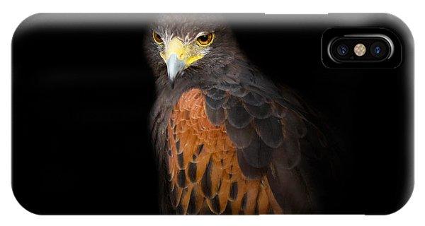 Hawk iPhone Case - Harris Hawk by Bill Wakeley