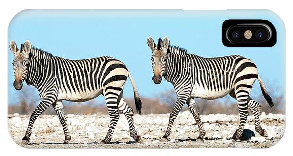 Zebra iPhone Case - Hartmann's Mountain Zebra by Tony Camacho