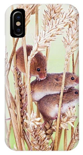 Monocotyledon iPhone Case - Harvest Mice On Wheat by John Devries