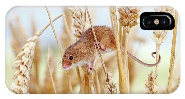 Monocotyledon iPhone Case - Harvest Mouse On Wheat by John Devries