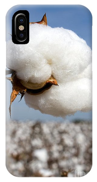 Harvest Ready Cotton Boll IPhone Case