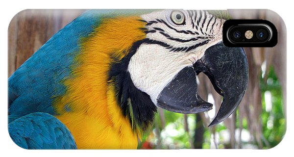 Harvey The Parrot 2 IPhone Case