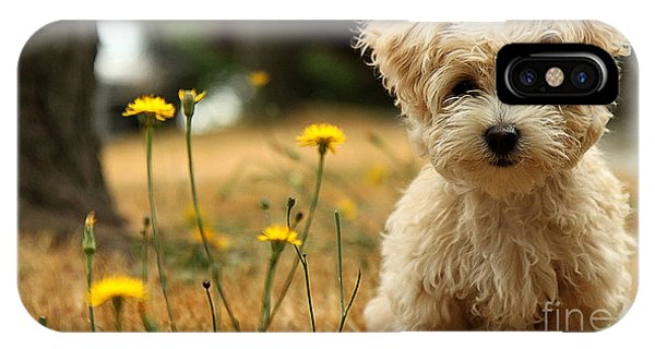 Portraits iPhone Case - Havanese Puppy  by Marvin Blaine