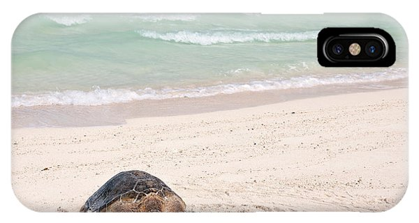 Archipelago iPhone Case - Hawaiian Green Turtle / Chelonia Mydas by Daisy Gilardini