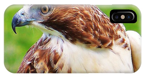 Hawk Is Focused IPhone Case