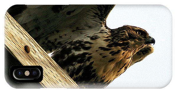 IPhone Case featuring the photograph Hawk On Telephone Pole by William Selander