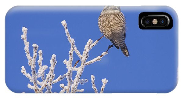Winter iPhone Case - Hawk Owl Perched On Hoarfrosted by Doug Lindstrand
