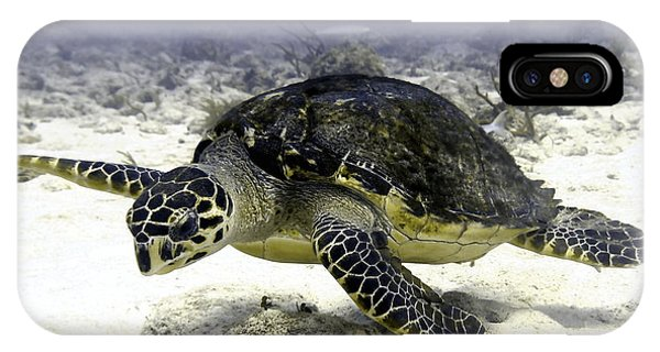 Hawksbill Caribbean Sea Turtle IPhone Case