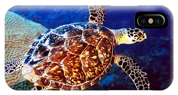Hawksbill IPhone Case