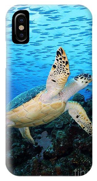 Barrier Reef iPhone Case - Hawksbill On Eldorado by Carey Chen