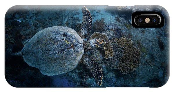 Dive iPhone Case - Hawksbill Sea Turtle by Barathieu Gabriel