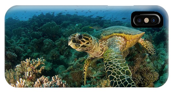 Egyptian iPhone X Case - Hawksbill Sea Turtle by Ilan Ben Tov