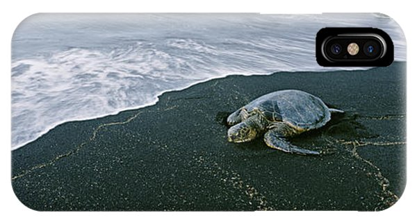 Black Sand iPhone Case - Hawksbill Turtle Endangered Species by Animal Images