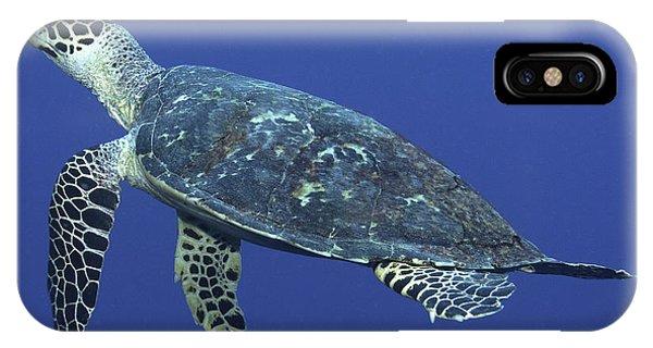 Hawksbill Turtle Phone Case by Paula Marie deBaleau