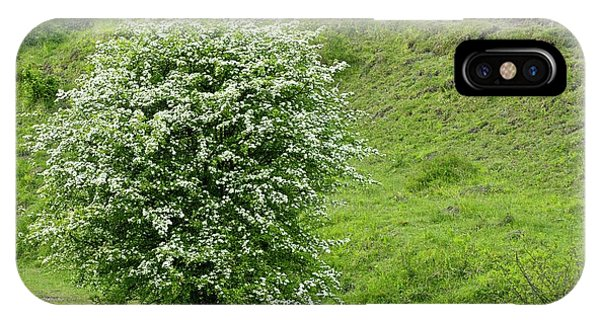 Deciduous iPhone Case - Hawthorn (crataegus Monogyna) by Bob Gibbons/science Photo Library