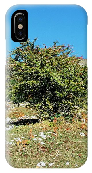 Blue Berry iPhone Case - Hawthorn (crataegus Monogyna) by Bruno Petriglia/science Photo Library