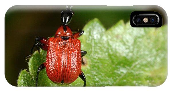 Hazel Leaf-roller Weevil Phone Case by Nigel Downer