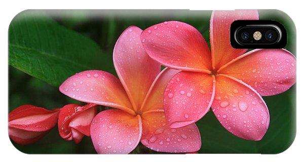 He Pua Laha Ole Hau Oli Hau Oli Oli Pua Melia Hae Maui Hawaii Tropical Plumeria IPhone Case