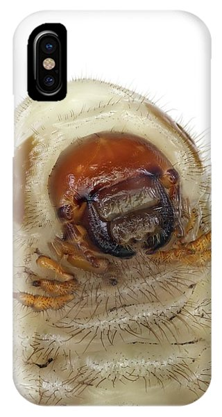 Coleoptera iPhone Case - Head Of A Beetle Larva by F. Martinez Clavel