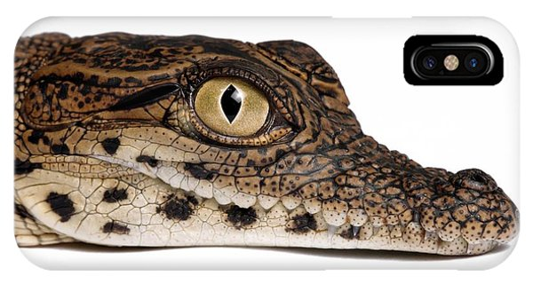 Crocodile iPhone Case - Head Of A Young Nile Crocodile by Pascal Goetgheluck/science Photo Library