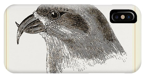 Head Of Crossbill IPhone Case