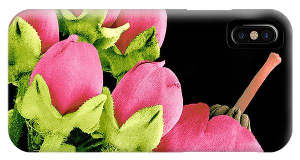 Heath Flowers Phone Case by Susumu Nishinaga