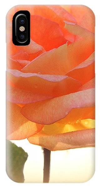 Heaven's Peach Rose IPhone Case