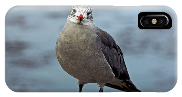 Heermann's Gull Looking At Camera IPhone Case