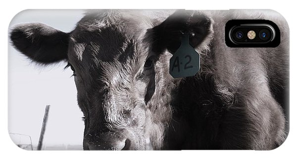 Heifer IPhone Case