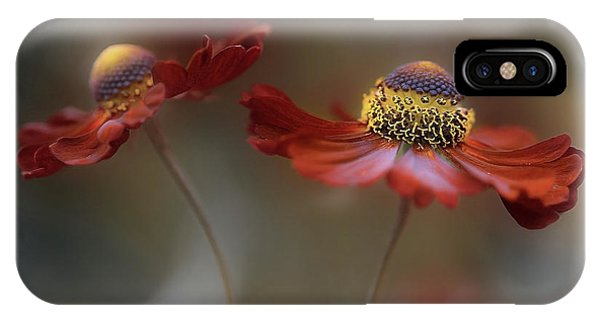Petals iPhone Case - Helenium Dance by Mandy Disher