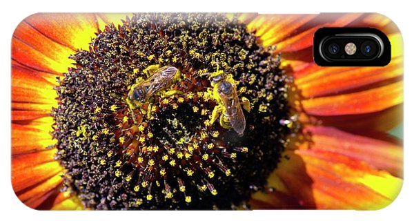 Helianthus Annuus 'solar Eclipse' Phone Case by Brian Gadsby/science Photo Library