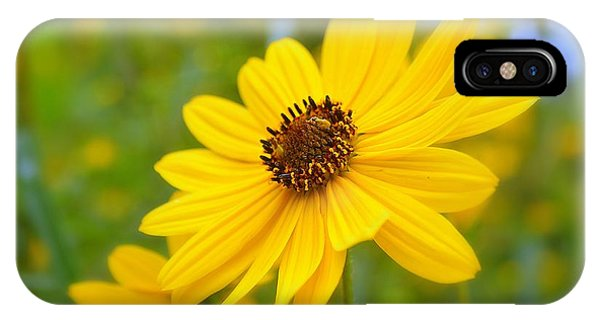 Helianthus IPhone Case