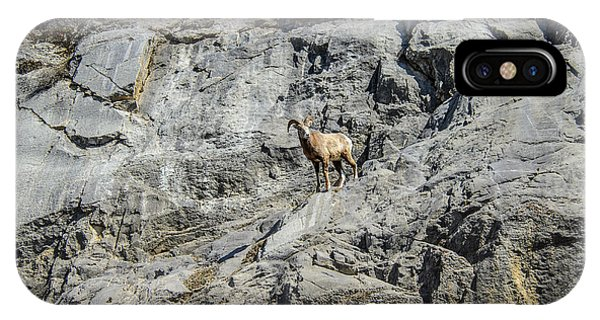 Big Horn Sheep Coming Down The Mountain  IPhone Case