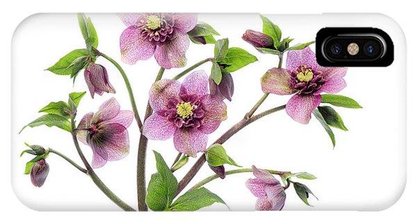 Pink Flower iPhone Case - Hellebore Tutu by Jacky Parker