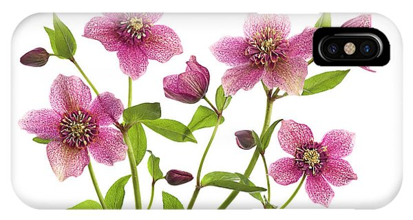 Flower Gardens iPhone Case - Helleborus X Hybridus Tutu by Jacky Parker