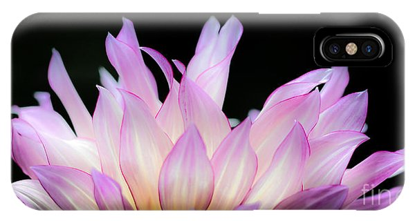 Hello Dahlia IPhone Case