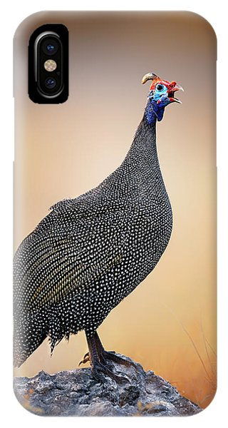 Avian iPhone Case - Helmeted Guinea-fowl Perched On A Rock by Johan Swanepoel