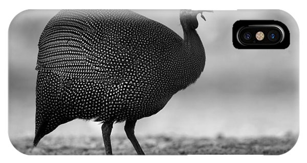 Helmeted Guineafowl IPhone Case