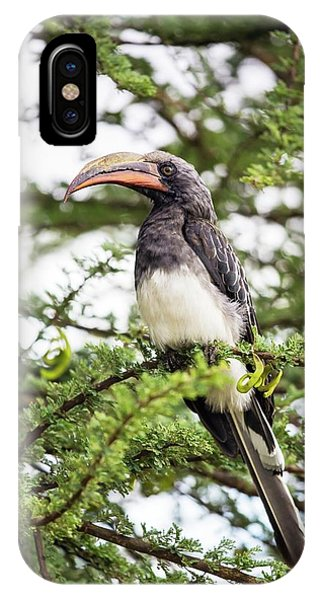 Hemprichs's Hornbill (tockus Hemprichii) IPhone Case