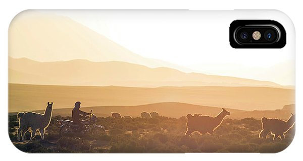 Llama iPhone Case - Herd Of Llamas Lama Glama In A Desert by Panoramic Images