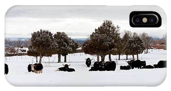 Herd Of Yaks Bos Grunniens On Snow IPhone Case