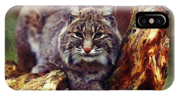 Lynx iPhone Case - Here Kitty Kitty by Lianne Schneider