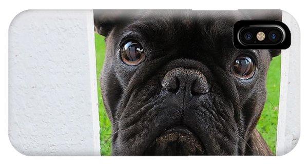 French Bull Dog iPhone Case - Hermes by Koji Kanemoto