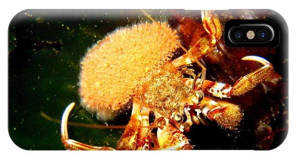 Hermit Crab Phone Case by April Muilenburg
