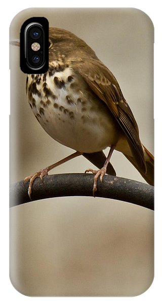Hermit Thrush IPhone Case