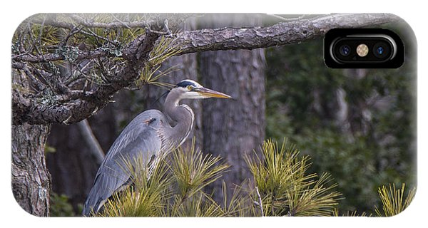 Heron In The Pines IPhone Case