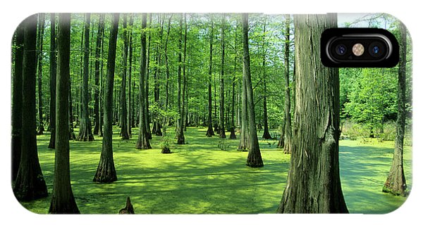 Bald Cypress iPhone Case - Heron Pond Bald Cypress Trees In Little by Richard and Susan Day